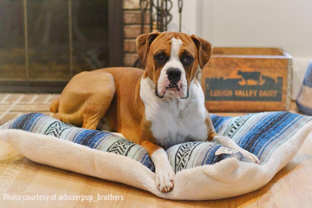 Classic Baja Blanket Dog Bed-Mint/Navy