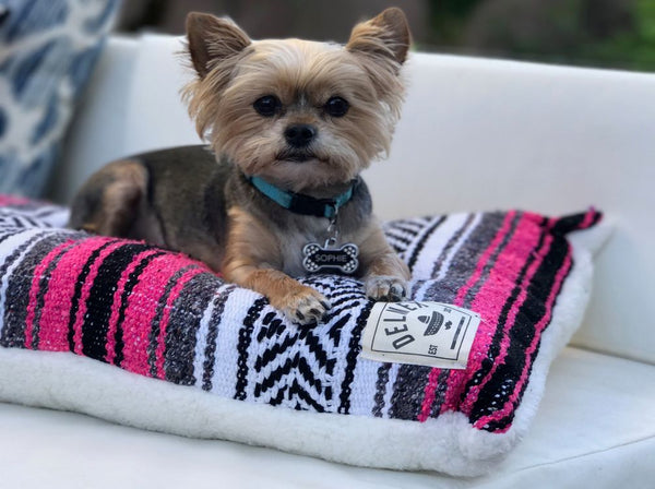 Classic Baja Blanket Dog Bed-Fuchsia