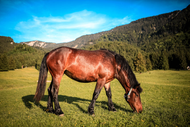 Can a Horse Eat Too Much Grass?
