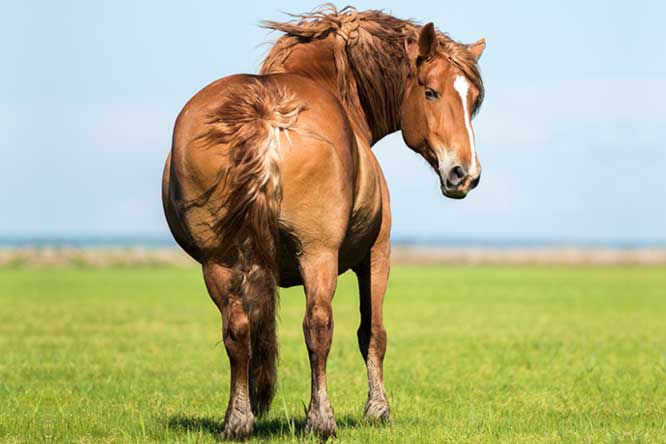 Is My Horse Fat?