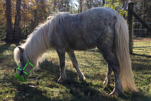 How do grazing muzzles contribute to overall horse health?