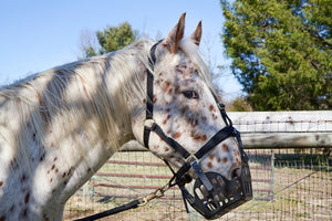 What Is a Grazing Muzzle?