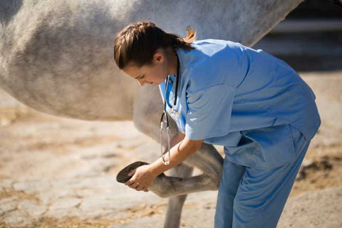 What to do if you suspect laminitis or other horse hoof problems!