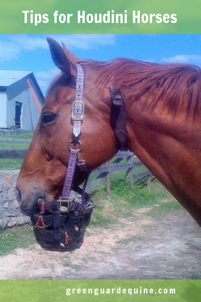 horse escapes from muzzle