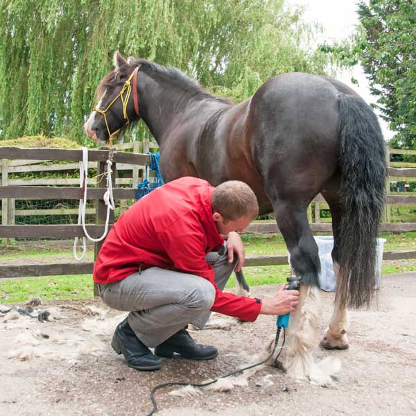 body clipping a horse
