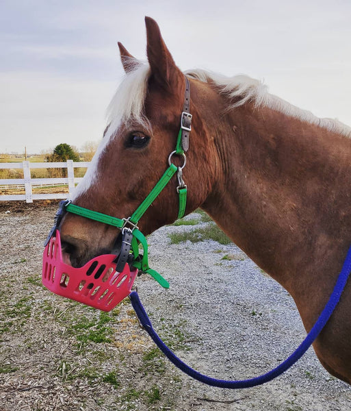 cob jockey greenguard grazing muzzle review