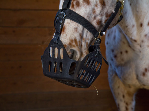 why do horses wear masks