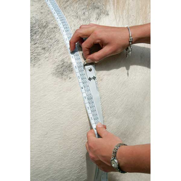 horse weight tape