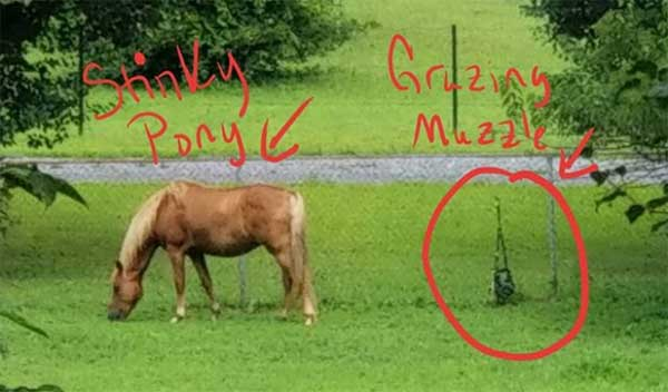 houdini horse and grazing muzzle