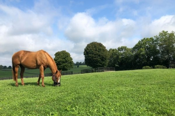 transition horse off grazing muzzle end of season