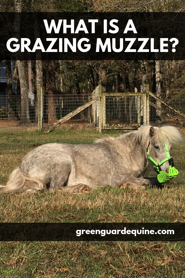 what is a grazing muzzle