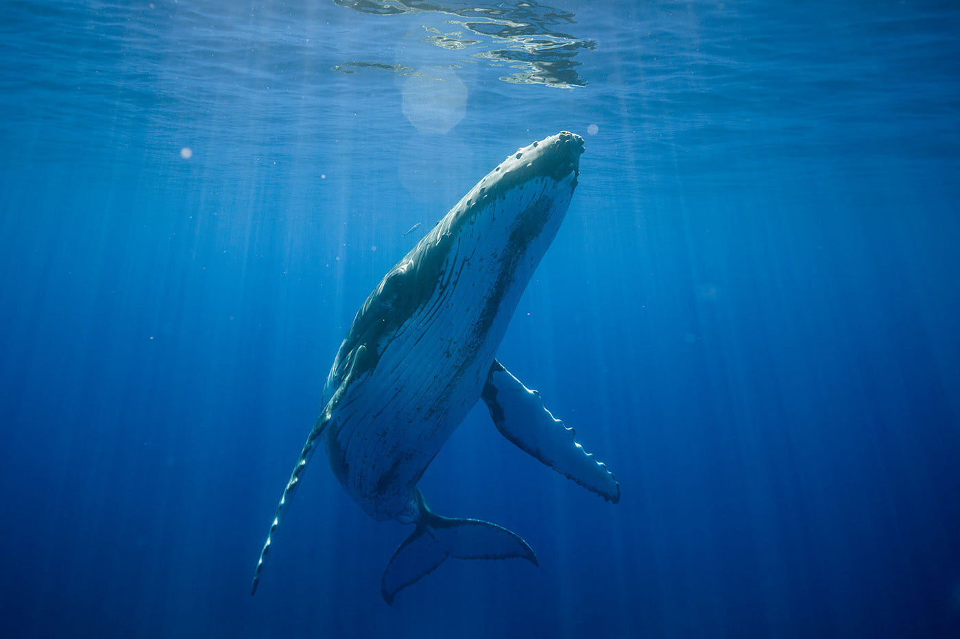 Capturing Whales and Turtles on Hasselblad Medium Format - Karim Iliya