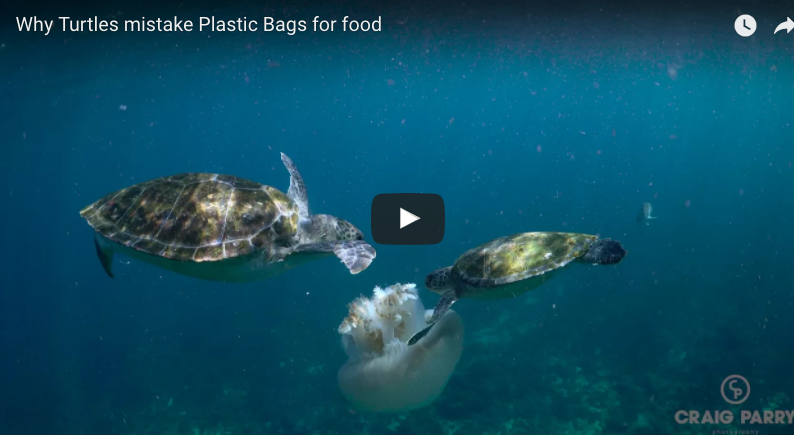 video of why turtles mistake plastic bags for food