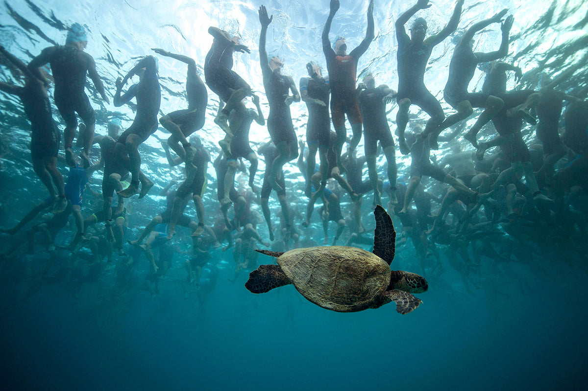 image of sea turtle with swimmers swimming above