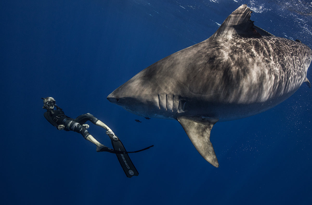 photo of a woman swimming in front of a shark by Juan Oliphant