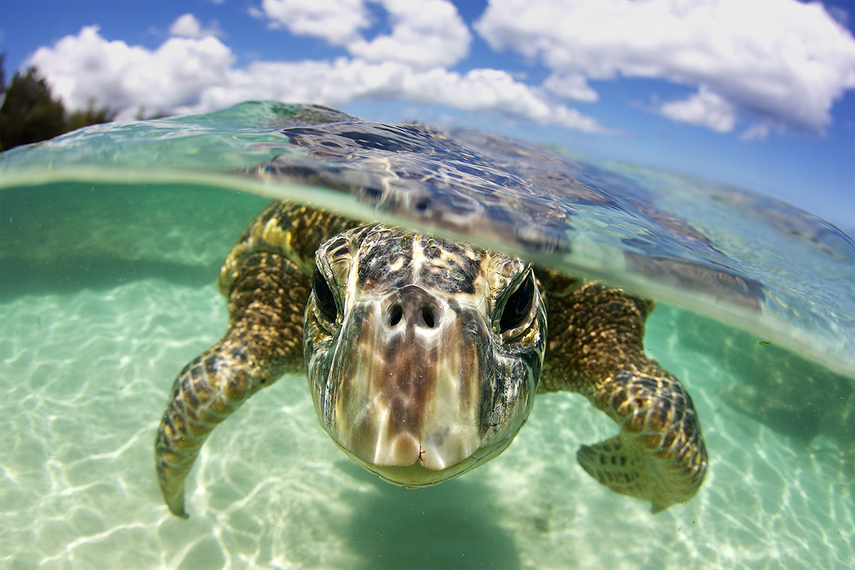 Juan Oliphant photo of a sea turtle
