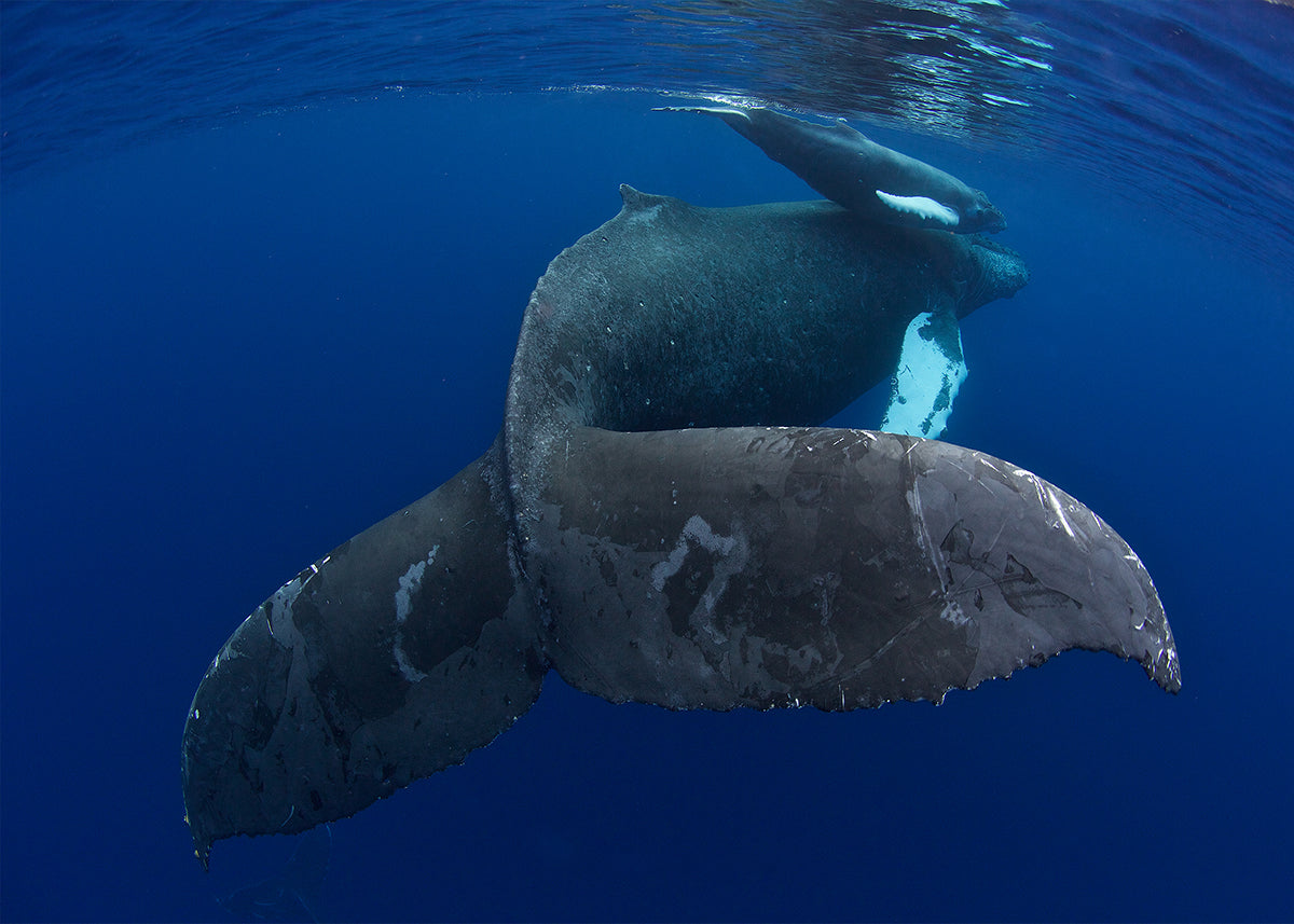 photo of whales taken with AquaTech underwater camera housing