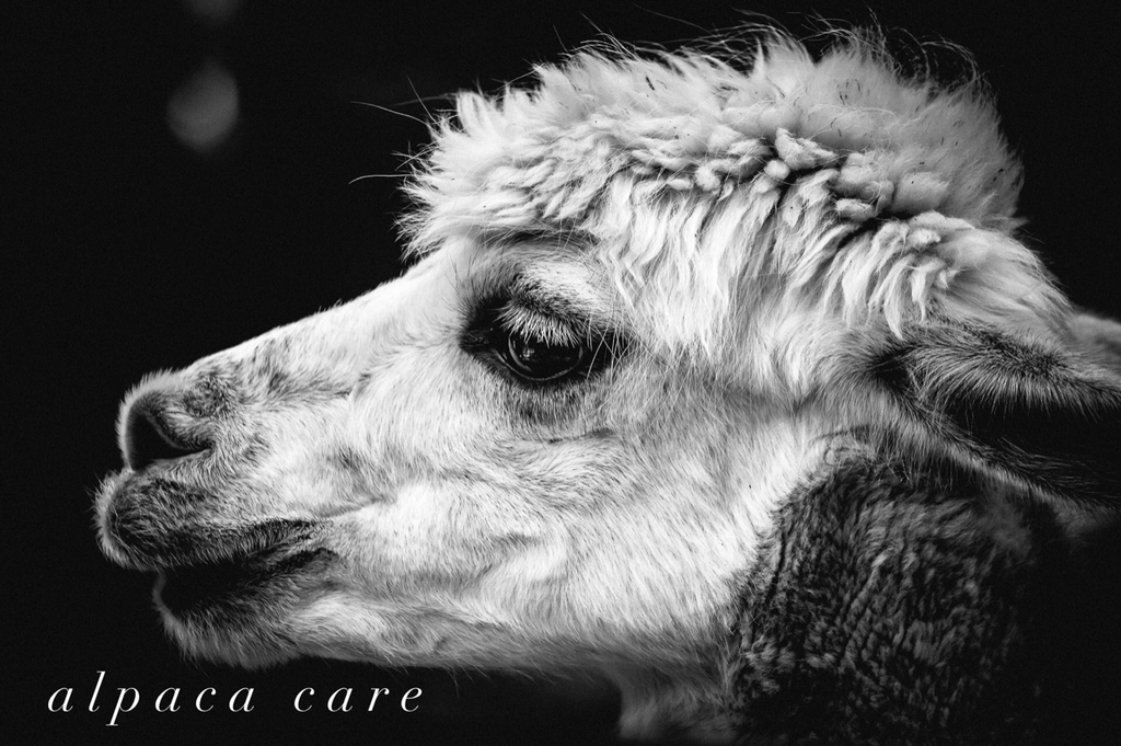 How to clean your alpaca garments