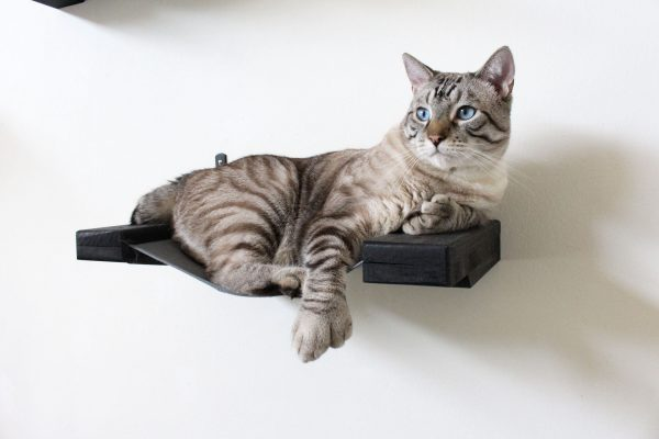 Large Cat Hammock Shelf