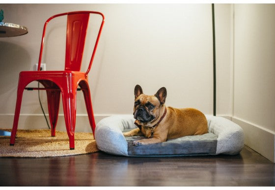 California Dreaming Memory Foam Dog Bed