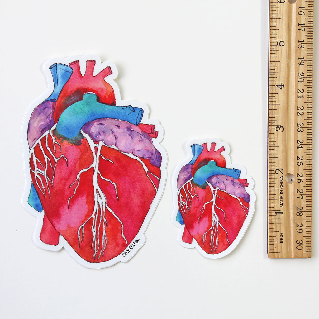 Anatomical Heart Vinyl Sticker - Sandra Black Culliton