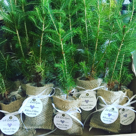 Seedling Favours The Newfoundland Tree Company