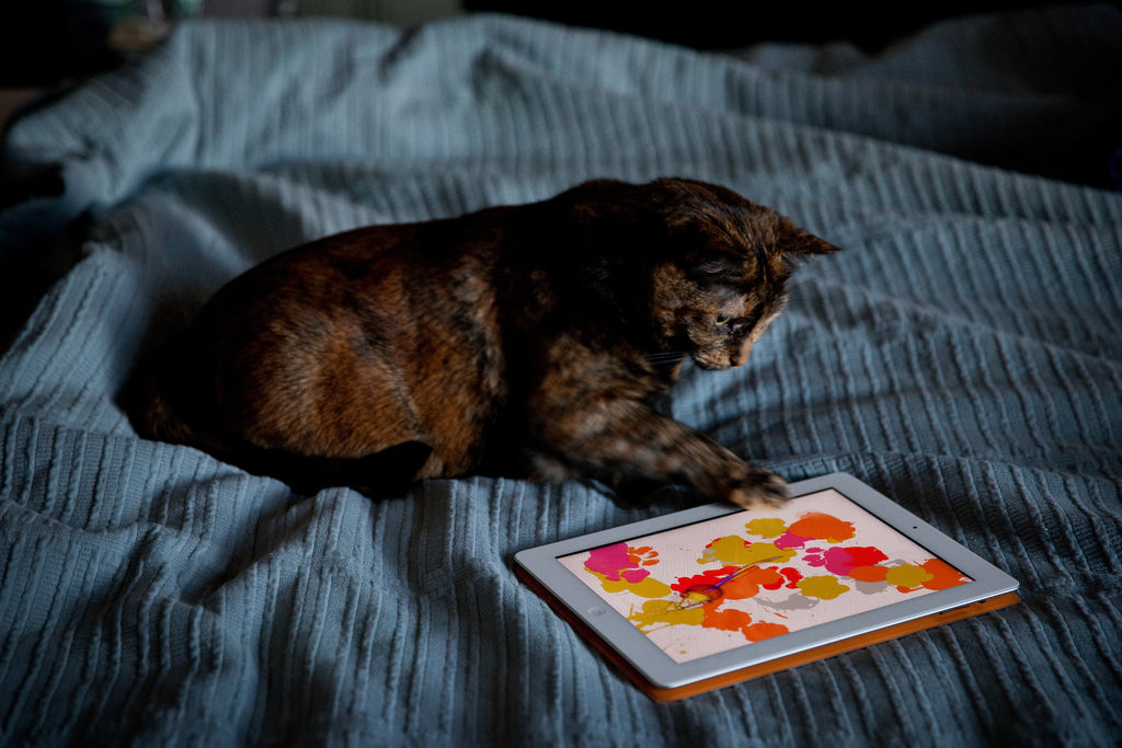 The Best Cats Apps