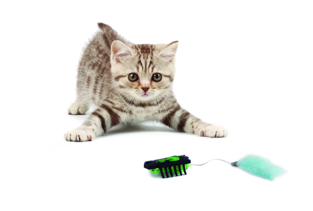Top 10  Best Cat Toys