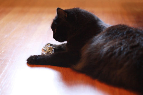 Mylar Cat Toys: Make your Friend Happy with a Shiny Cat Toy