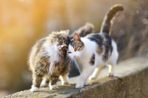 Taking in a Stray Cat: Is it bad to accept stray cats?