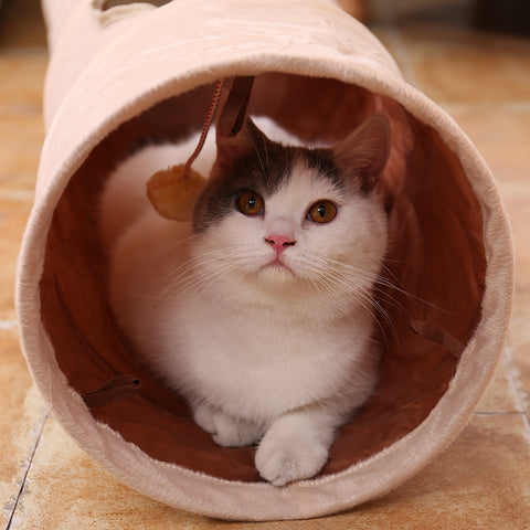 Cat Long Tunnel with Ball
