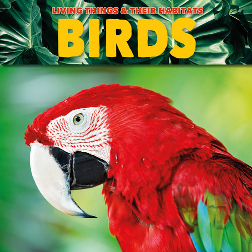 Birds Childrens book 9781912171781