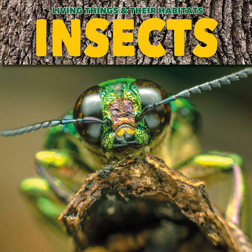 Insects Childrens book 9781912171811