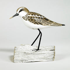 Archipelago Little Stint Standing