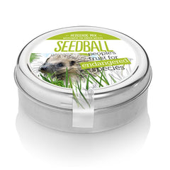 Seedball Hedgehog Tin