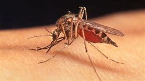 Florida health officials are warning of an uptick in a mosquito-borne virus