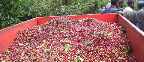Papua New Guinea Kimel Estate