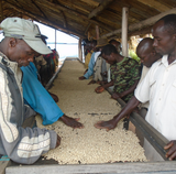Burundi Kanovera A Fair Trade