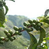 Colombia La Cristalina Excelso