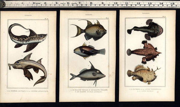 Fish c.1830's Poissons unique display collection 10 fine old hand colored prints