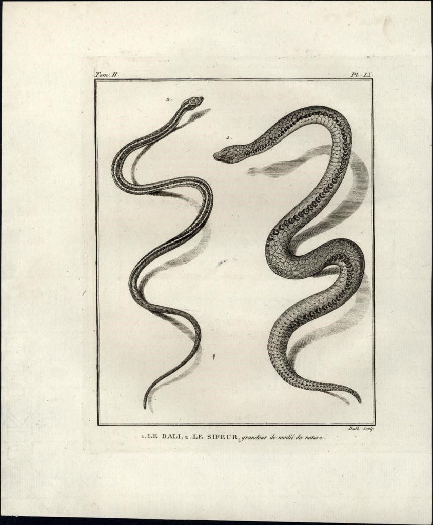 Bali Sifeur Snake Reptiles Reptilia 1770 fine scarce old engraved print