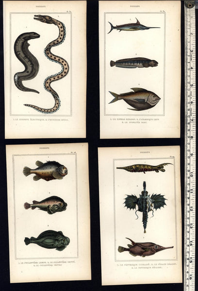 Tropical rare Fish Poissons c.1830's collection 8 fine old hand colored prints