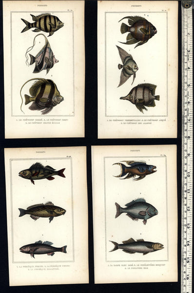 Tropical Fish Poissons c.830's display collection 8 fine old hand colored prints
