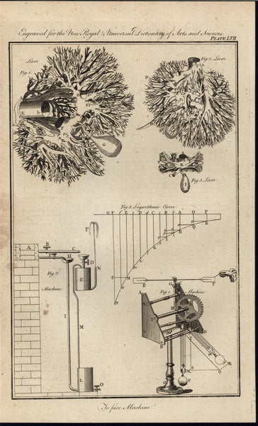 Anatomy of the Liver Veins Arteries & Machinery 1771 antique engraved print