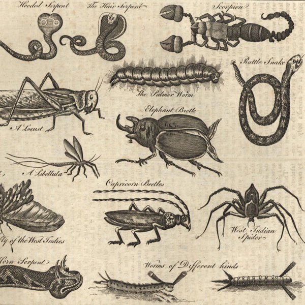 Reptiles & insects of world beetle scorpion spider 1778 nice old engraved print