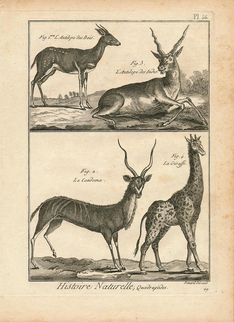 African antelope Rochers Coudou & Guib &c fine 18th Century antique Animal print