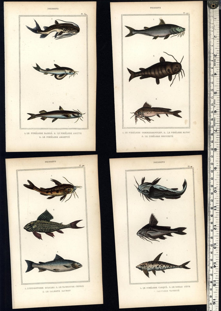 Fish Poissons lovely c.1830's display collection 8 fine old hand colored prints