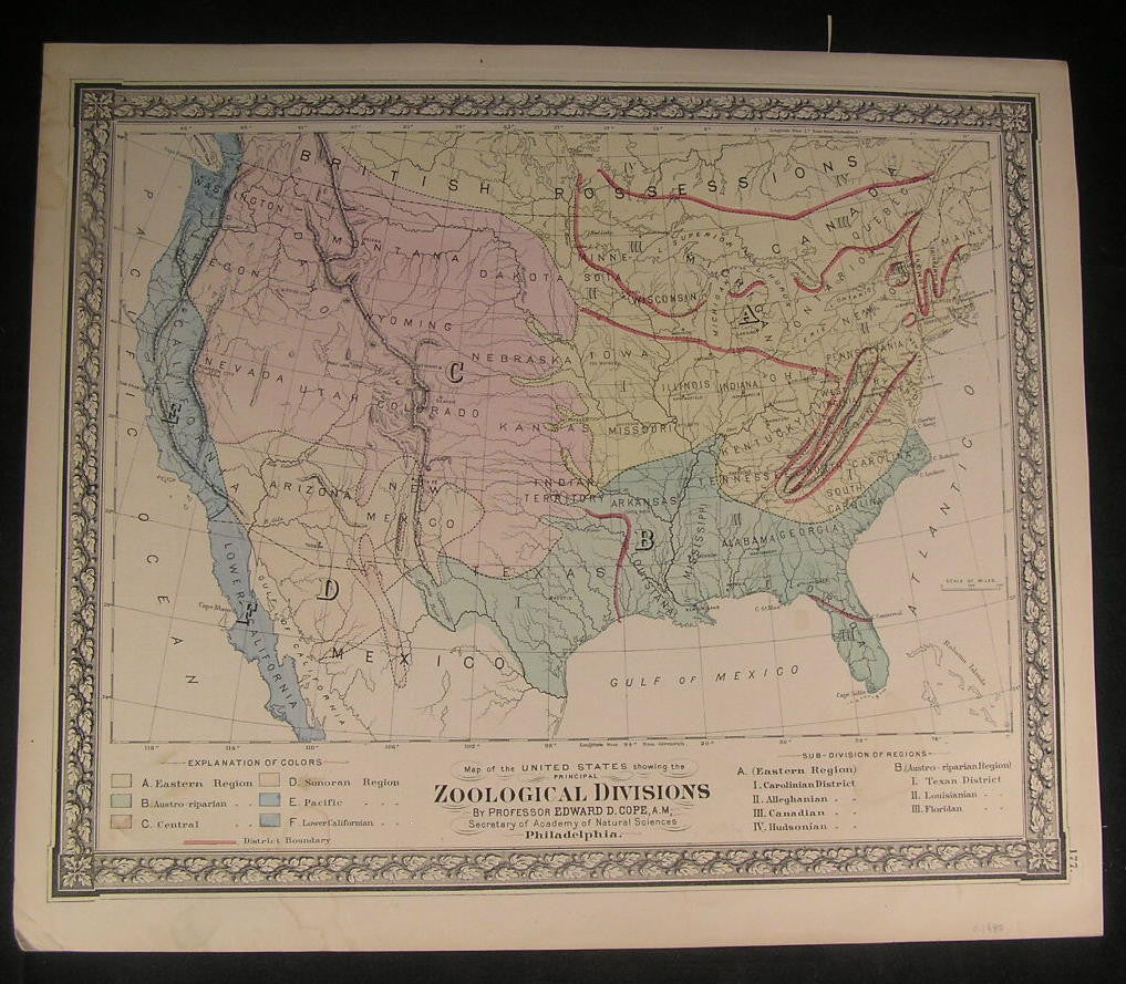 Zoological Divisions in United States c.1880 old vintage hand color map