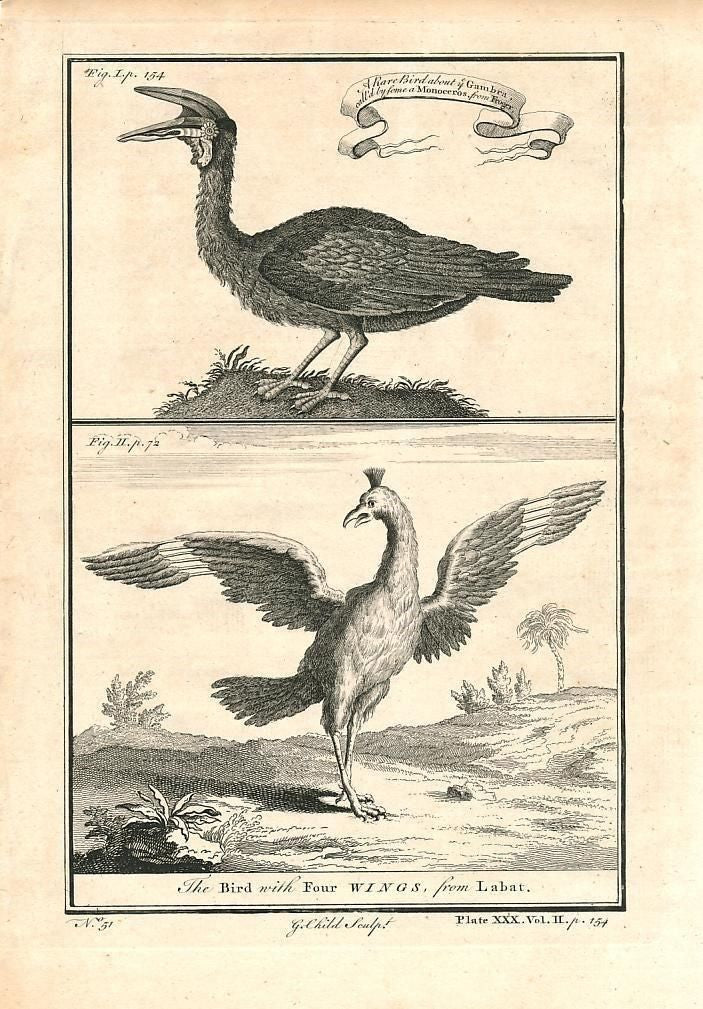 Monocerous & four-winged bird Labat Africa 1745 antique engraved print