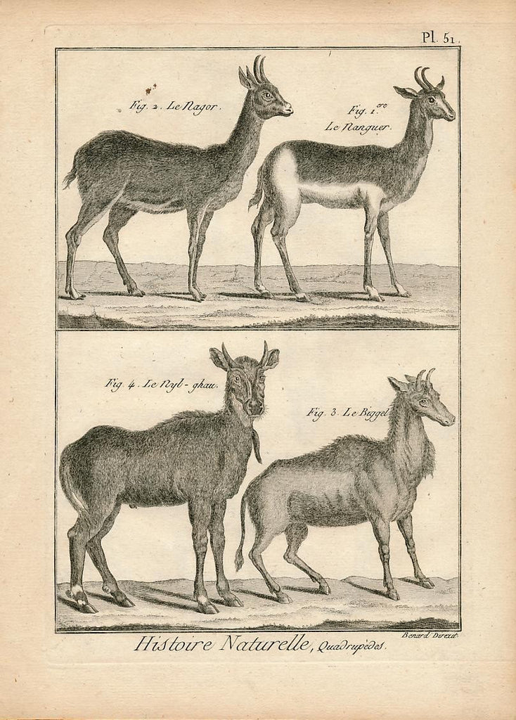 Antelope Redbuck Gazelle & Biggel fine 18th Century antique Animal print